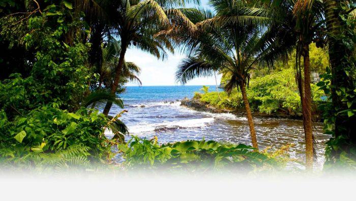 Hawaii Kailua1 Printing Service
